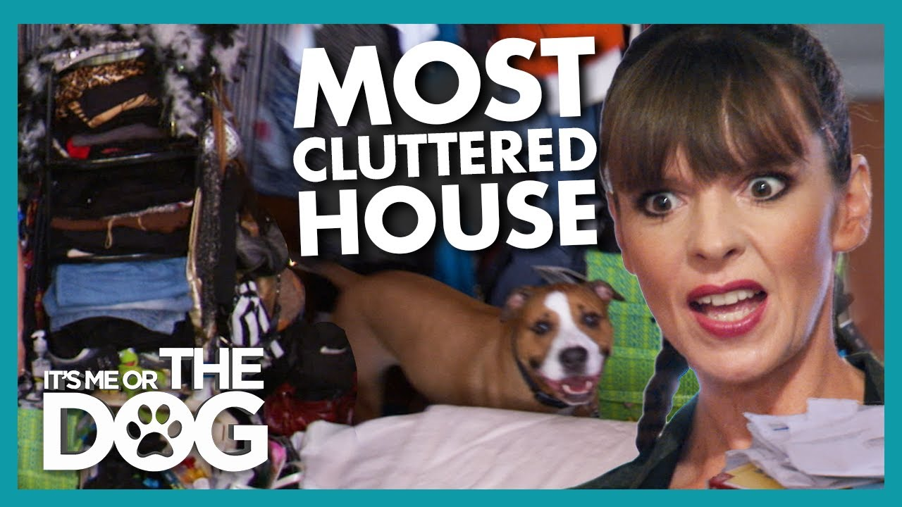 Family Dog Stressed Out in House FULL of Clutter | It's Me or The Dog