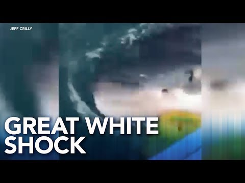 Otis - Fisherman Lose It When They Have A Close Encounter With A 16-Ft Great White