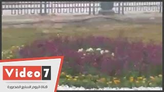 بالفيديو.. «تحيا مصر» تُزين المساحات الخضراء بميدان التحرير
