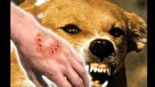 Video Isu Penyakit Anjing Gila(Rabies) download MP3, 3GP, MP4, WEBM, AVI, FLV Desember 2017