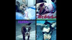 S. Florida Small Dogs For Adoption