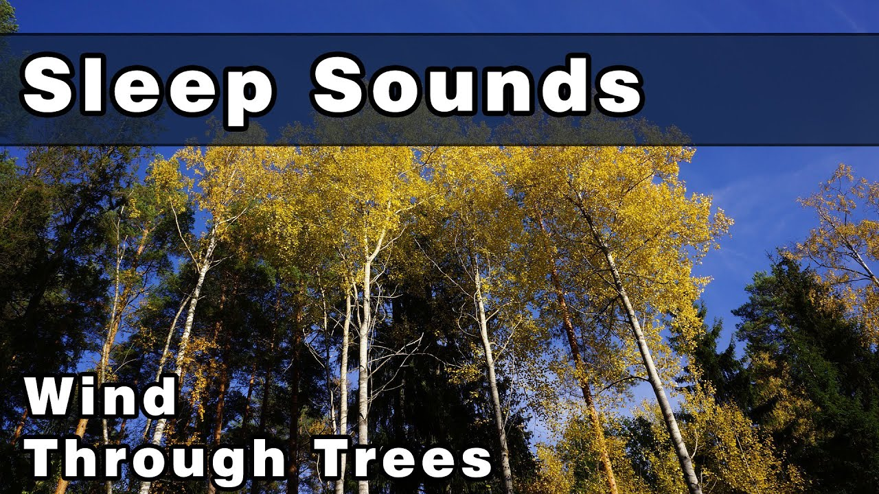 Wind Through Trees With Bird Sounds | Sounds To Sleep To | Relaxing Sounds  | Nature Sounds
