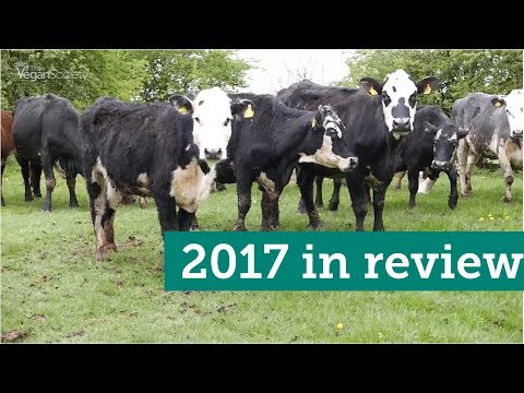 The Vegan Society year in review: 2017