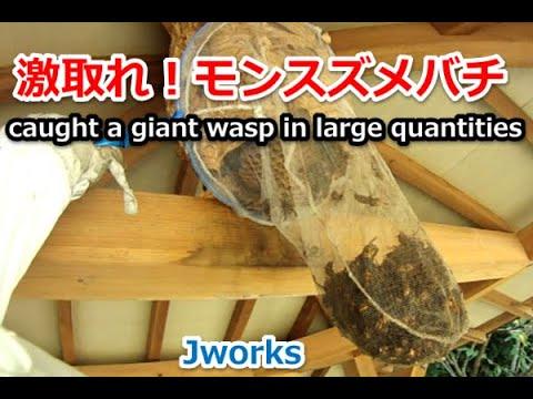 巨大ミツバチの巣! 4 years ago 巨大ミツバチの巣! 家の近くにミツバチの巣があ...