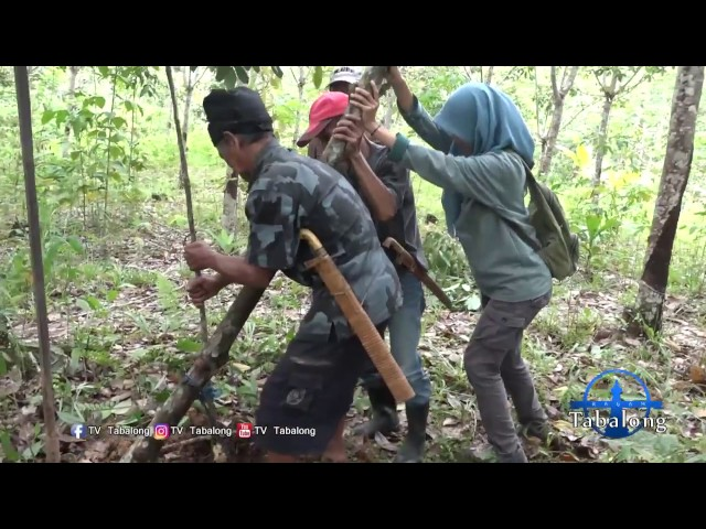 Ragam Tabalong (Eps. Olahan Pasak Bumi Dayak Deah Upau) Part 1 of 3 #TV Tabalong