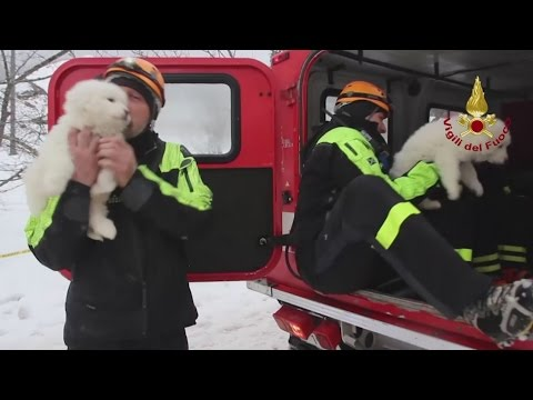 Pups found in boiler room of Italy avalanche hotel