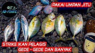 MANTAP Dapat Ikan Besar & Banyak Menggunakan Umpan Ini - Mancing Pinggiran