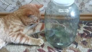 Как научить кота мышей ловить?