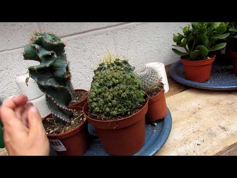 Plant Shopping at Urban Plant Life Garden Centre & buying new Cactus Plants and Ferns - VLOG