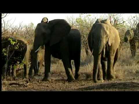 Great Limpopo Transfrontier Park: Giriyondo Access Facility