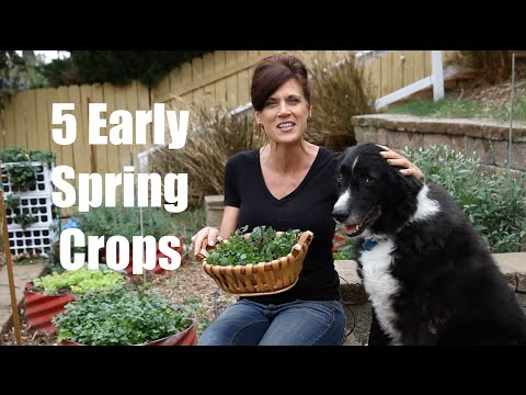 The 5 of the Best Easy-to-Grow Early Spring Crops