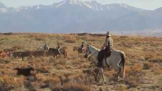 """""""Branding week"""" au ranch des bisons avec Cheval d'Aventure"""