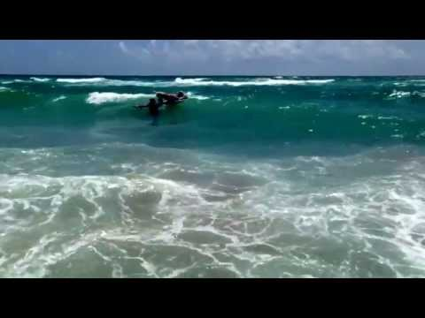 Ocean Magic and Big Dog Rescue Ranch dog surfing competition at Jupiter Florida beach.