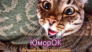 Кот ошалел от запаха хозяйских носков | ЮморОК
