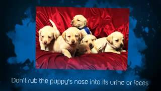 Labrador Puppy Training Tips | Puppy Potty Training Tips | Tips On House Training A Puppy | Crate