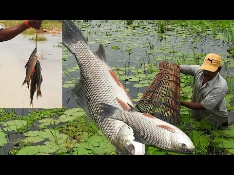 Fish Catching with Bamboo Grill | Amazing Fishing in Lotus Pond | Fishing in Andhra Province