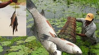 Fish Catching with Bamboo Grill   Amazing Fishing in Lotus Pond   Fishing in Andhra Province