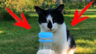 Кот Малыш и Bottle Cap Challenge!  My Funny cat