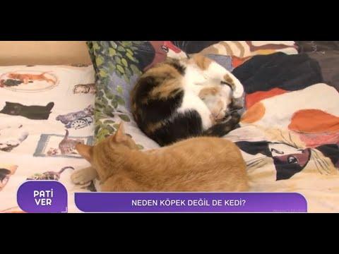 Çaldığı Parçalarla Kedileri Sakinleştiriyor? | Sarper Duman