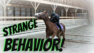 OUR MARE HAS SPRING FEVER! Day 057 (02/26/18)