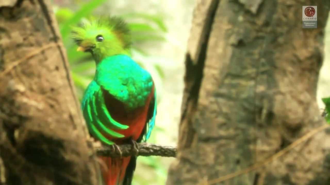 Download Biodiversidad de México