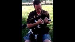 Black Sage German Shorthaired Pointer Puppies Part 3