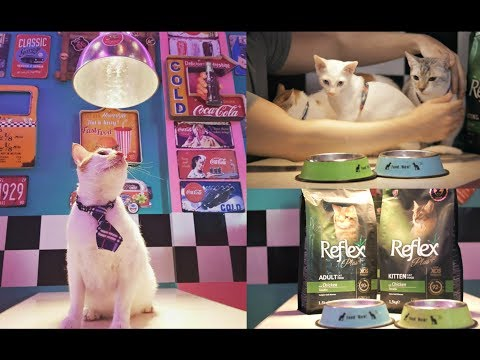 From STRAY CATS To STARDOM!  How My Cats Became CATFOOD Endorsers 🌎