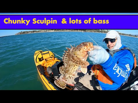 Lots Of Bass Kayak Fishing Dana Point 11_23_2018
