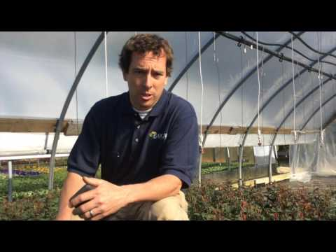 Q&A Tuesday with Stephen Barlow Episode_004 Best tips for Moss, Trailing Geraniums and Roses.
