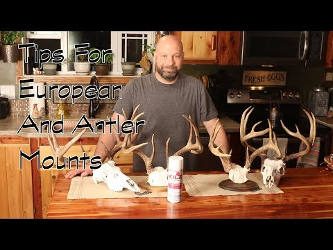 Tips For European And Antler Mounts