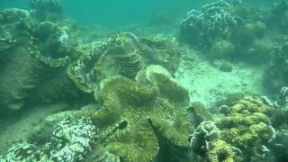 Giant Clam at Maxima Beach