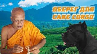 Как мы покупали оберег для собаки кане корсо на Шри Ланке. #canecorso #srilanka