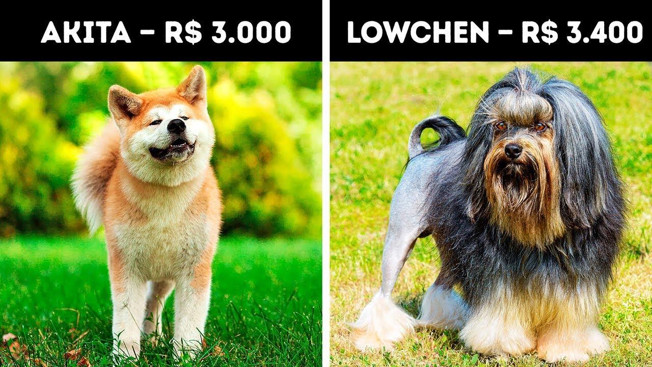 20 Cachorros Que Custam Uma Fortuna