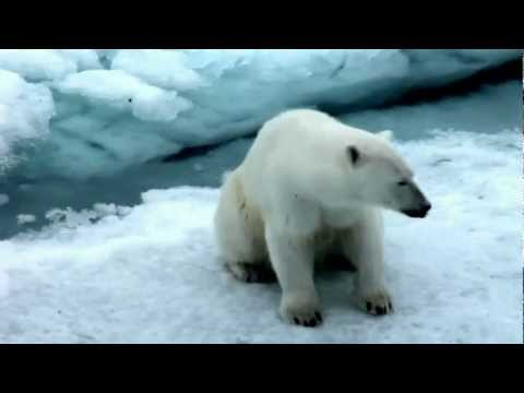 видео для детей с белыми медведями