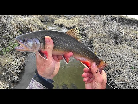 Wisconsin Trout Fishing - 3/27/2020