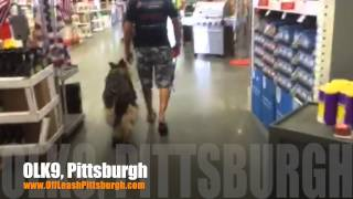 Off Leash Heeling Through A Store | German Shepherd | Pittsburgh Dog Trainers
