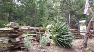 Planting a Big Yucca