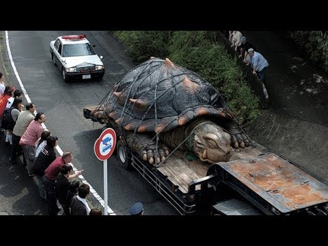 Abnormally Huge Animals That Are Actually Real