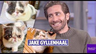 Baixar Jake Gyllenhaal on Flufflestiltskin Instagram