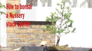 How to bonsai a Conifer Part 2.