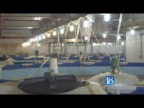 Carroll County shrimp farm one of Indiana's largest