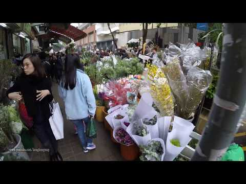 Hong Kong Chinese Lunar New Year Pre-Walk 2018 @ Mong Kok Flower Market 太子花墟 (20180214)