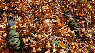 Запасаем осень на зиму! Прячем зоологов в листве