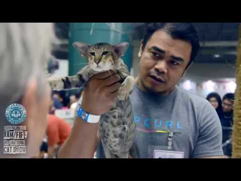 EKSPO KUCING 2017   KKM/FIFE INTERNATIONAL CAT SHOW PART 10
