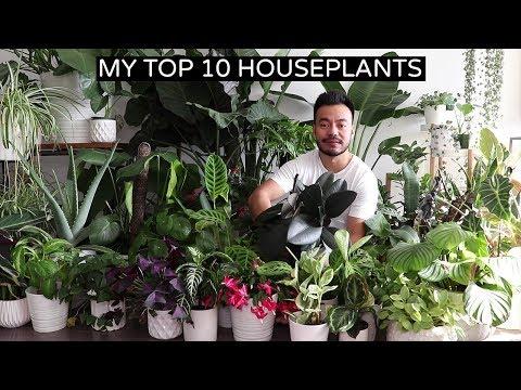 My Top 10 Favorite Houseplants | Fall 2018