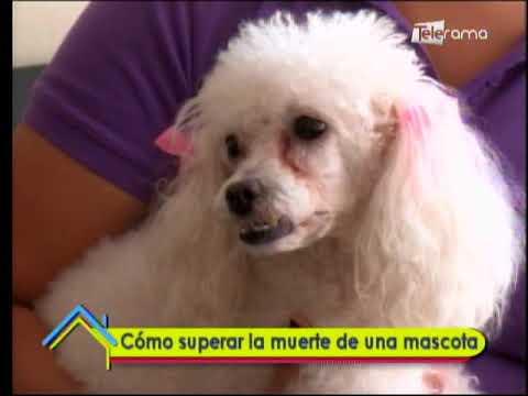 Cómo superar la muerte de una mascota