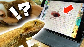 虫を潰すゲームで遊ぶトカゲ -Lizard plays bugs crusher-