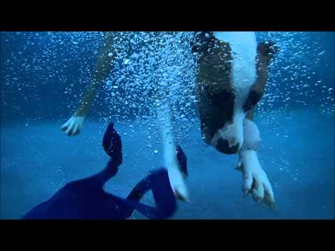 Pit Bull Terrier Annie diving underwater in swimming pool for her dog toy - slow mo
