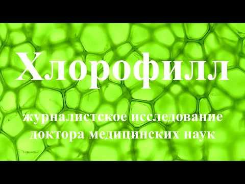 Морозник - Купить корень морозника Кавказского.