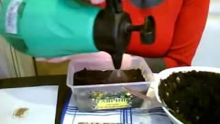 видео Лобулярия. Выращивание из семян в саду